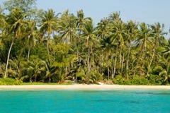 Naturaleza en las zonas tropicales Foto de archivo libre de regalías