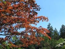 Naturaleza en marrón y verde Foto de archivo libre de regalías