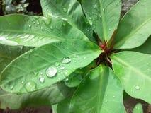 Naturaleza en monzón imagenes de archivo