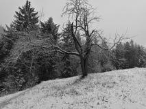Naturaleza en negro Imagen de archivo