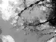 Naturaleza en Noir Fotografía de archivo