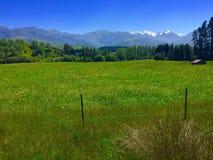Naturaleza en Nueva Zelanda Fotografía de archivo libre de regalías