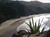 Naturaleza en Nueva Zelanda Imagen de archivo