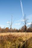 Naturaleza en otoño Foto de archivo