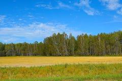 Naturaleza en otoño temprano en Siberia Foto de archivo libre de regalías