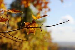 Naturaleza en otoño, territorio de Altai, Siberia occidental, Rusia Foto de archivo libre de regalías
