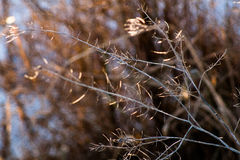 Naturaleza en primavera temprana Fotografía de archivo libre de regalías