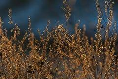Naturaleza en primavera temprana Fotos de archivo libres de regalías