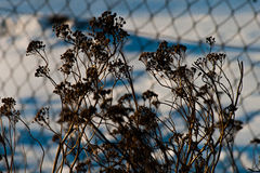 Naturaleza en primavera temprana Foto de archivo