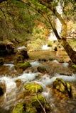 Naturaleza en Serbia Foto de archivo