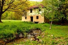 Naturaleza en Serbia Imagen de archivo