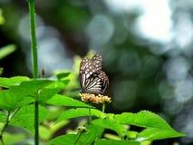 Naturaleza en su mejor Fotos de archivo