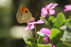 Naturaleza en su mejor imagenes de archivo