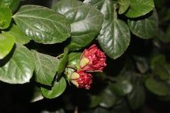 Naturaleza en su pico Foto de archivo libre de regalías