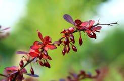 Naturaleza en toda su belleza 13 foto de archivo libre de regalías