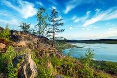 Naturaleza en verano fotos de archivo libres de regalías