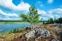 Naturaleza en verano imágenes de archivo libres de regalías