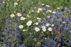 Naturaleza en verano. Hierba abigarrada Foto de archivo libre de regalías