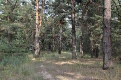 Naturaleza en verano maderas Fotos de archivo libres de regalías