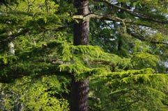 Naturaleza espectacular 1 Fotografía de archivo