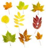 Naturaleza estacional de la caída del otoño de la hoja Foto de archivo