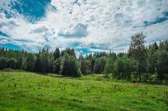 Naturaleza finlandesa Fotos de archivo libres de regalías