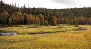 Naturaleza finlandesa Imagenes de archivo