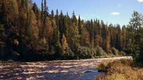 Naturaleza finlandesa en otoño Fotografía de archivo libre de regalías