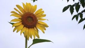 Naturaleza, flor, verano almacen de video