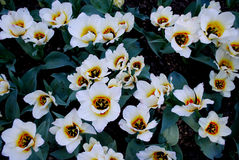 Naturaleza Flores Foto de archivo libre de regalías