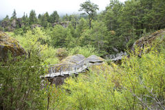 Naturaleza Forest Scenic Trail de Chile Fotografía de archivo libre de regalías