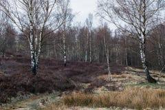 Naturaleza Heather Landscape Siegerland Germany con el árbol Fotografía de archivo