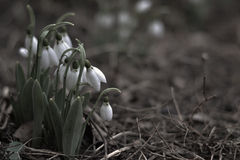 Naturaleza hermosa Imagen de archivo libre de regalías