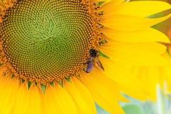 Naturaleza hermosa Foto de archivo libre de regalías
