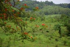 Naturaleza hermosa Fotografía de archivo libre de regalías