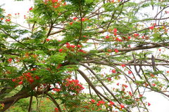 Naturaleza hermosa Fotos de archivo