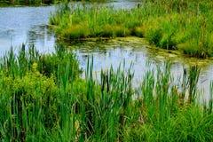 Naturaleza hermosa Altaya Fotografía de archivo