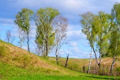Naturaleza hermosa Altaya Imagen de archivo