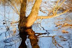 Naturaleza hermosa Altaya Fotos de archivo libres de regalías