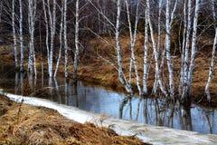 Naturaleza hermosa Altaya Imágenes de archivo libres de regalías