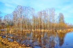 Naturaleza hermosa Altaya Foto de archivo