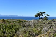 Naturaleza hermosa con muchos árboles grandes en la manera al Cabo de Buena Esperanza en Cape Town en el viaje de la península de Fotografía de archivo