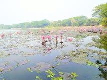 Naturaleza hermosa de Bagerhat Bangladesh Bangladesh fotos de archivo