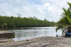 Naturaleza hermosa de la opinión de madera del embarcadero del abandono, bosque del mangle Imagenes de archivo