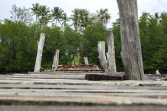 Naturaleza hermosa de la opinión de madera del embarcadero del abandono, bosque del mangle Imágenes de archivo libres de regalías