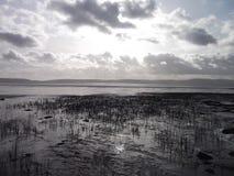 Naturaleza hermosa del amor de la costa, Dundee Imagenes de archivo
