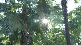 Naturaleza hermosa del follaje fresco de la palmera del bosque de la selva debajo del sol brillante del clima tropical 4K almacen de video