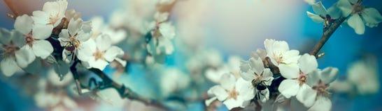Naturaleza hermosa en la primavera - abeja que recoge la miel y el polen Imagen de archivo