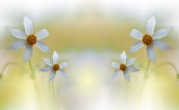 Naturaleza increíblemente hermosa Fotografía del arte moderno Diseño de la fantasía Fondo creativo Flores blancas coloridas asomb fotografía de archivo libre de regalías