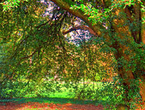 Naturaleza Irlanda imagen de archivo